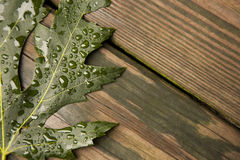 Green Maple Leaf on wet wood boards Royalty Free Stock Photography