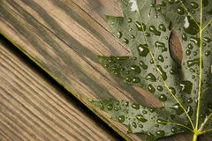 Green Maple Leaf on wet wood boards Stock Photo