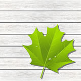 Green maple leaf on wood Royalty Free Stock Photo