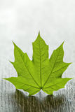 Green maple leaf on wooden table Stock Photography
