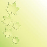 Green maple leaves. Stock Photos