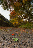 Green maple leaves and colorful trees in autumn and a footpath l. Eading into the scene stock photography