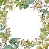 Green maple leaves. Leaf plant botanical garden floral foliage. Frame border ornament square. Aquarelle leaf for background, texture, wrapper pattern, frame or vector illustration