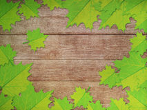Green maple leaves over wooden background Royalty Free Stock Photo