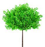 Green maple tree, 3d illustration stock images