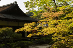 Green maple trees in the Japanese garden. Stock Image