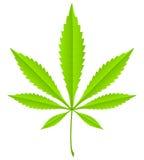 Green marijuana leaf Stock Images