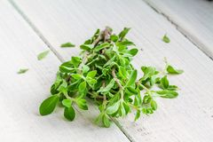 Green marjoram herb leaves on a wooden background Stock Photo