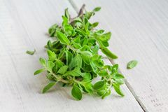 Green marjoram herb leaves on a wooden table Stock Images