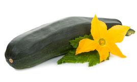 Green marrow with flower and leaf Stock Photos