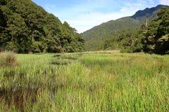 Green marsh. Summer marsh scene, green grass, blue sky and white cloud Royalty Free Stock Photo