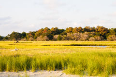 Green Marsh Grass by Beach Royalty Free Stock Image