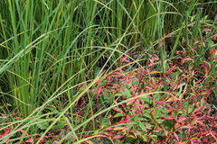 Green marsh grass Stock Photo