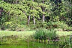 Green marsh plant. Stock Photography