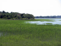 Green Marshland on Island Royalty Free Stock Photo