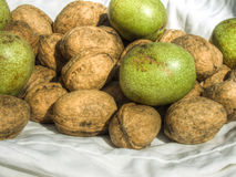 Green and mature walnuts on fabric Stock Photos