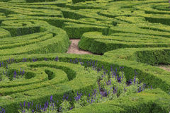 Green maze. Green ornamental maze in the formal garden Stock Photos