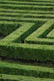 Green maze. Beautiful green maze, great for metaphors Stock Photography