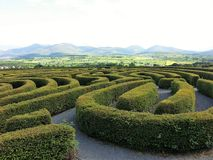 GREEN MAZE. Beautiful labyrinth, maze design in garden of the park Royalty Free Stock Photos