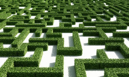 Green maze1. A labyrinth consisting of green bushes on a white plane Stock Photo