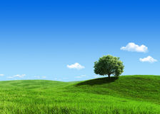 Green meadow 1 tree template Royalty Free Stock Photography