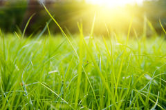 Green meadow. In summer sun rays Stock Photos