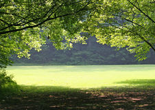 Green Meadow. Forest view of green meadow Royalty Free Stock Photo