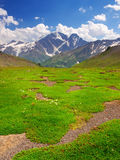 Green meadow. On background mountain range. Natural composition Stock Images