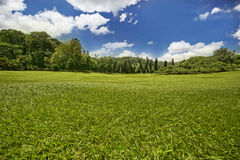 Green meadow. With blue sky and clouds over it, at Sri Lanka royal garden Stock Image
