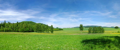 Green meadow. And blue sky during the spring Royalty Free Stock Photo