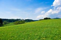 Green meadow Stock Photo