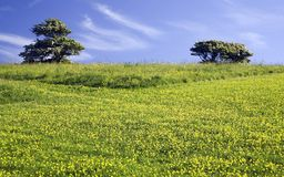 Green meadow with 2 trees Royalty Free Stock Photography