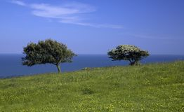 Green meadow with 2 trees sea stock photography