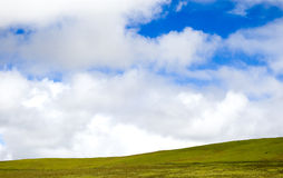 Green meadow. Green grass scene, with a cloudy blue sky Royalty Free Stock Photos