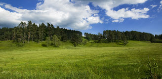 Green meadow. Beautiful spring view of a green meadow Stock Photos