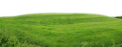 Free Green Meadow Stock Photography - 41053922