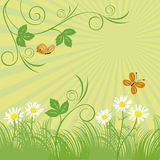 Green meadow. Patterns from leaves, chamomiles, butterflies on a blossoming green meadow Royalty Free Stock Photos