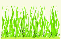 Green meadow. Green lawn for game in a golf Royalty Free Stock Photos