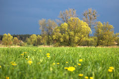 Green meadow. Green spring meadow (focus on trees royalty free stock photography