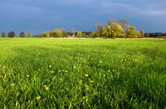 Green meadow Royalty Free Stock Photos