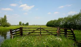 Green meadow. Spring landscape of fence in green meadow with fading dandelions-holland royalty free stock images