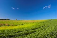 Green meadow. And blue sky royalty free stock photo