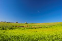 Green meadow. And blue sky royalty free stock photos