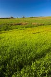Green meadow. And blue sky royalty free stock image