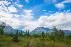 Green Meadow in Alaska Wilderness Stock Photography