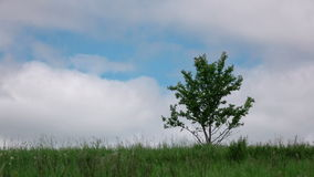 Green meadow with alone tree. stock video footage