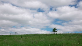 Green meadow with alone tree. stock footage