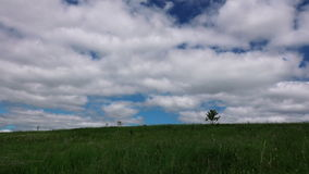 Green meadow with alone tree timelapse. stock video footage