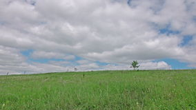 Green meadow with alone tree timelapse. stock footage