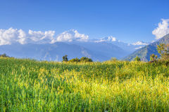Green meadow of annapurna circuit, nepal Royalty Free Stock Photography